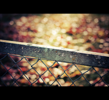 Fence and Bokeh by snarto