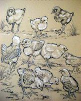 Baby Chicks Sketch by HouseofChabrier