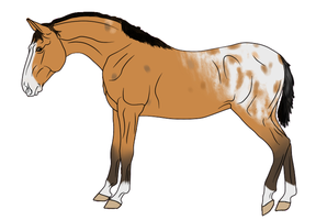 RR Kennels Lusitano Design 3 by DragonicWhispers