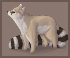 Ringtail by Kium