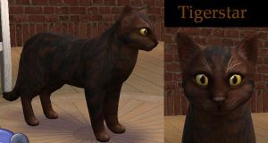 Warriors Ref - Tigerclaw-star by rebelwolfchris