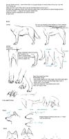 Wolf drawing tutorial by DachitaOokami