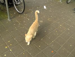 12-10-23 Unknown Cat by Herdervriend