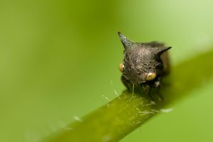 Tree Hopper.. by melvynyeo