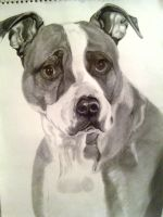 pitbull by the-1-and-only-dude