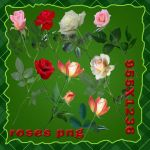 png rose by roula33