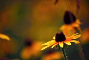 Warm Flower Bokeh by ksouth