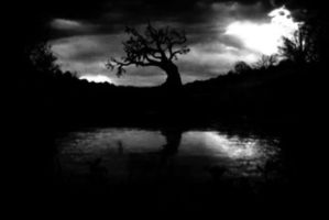 Dark Pond by ARoseWithoutThorns