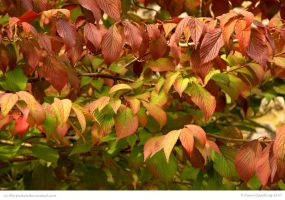 Autumnal Layers by In-the-picture