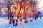 Colorful winter by EliseEnchanted