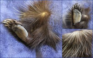 Porcupine Feet by ToothNClawTaxidermy