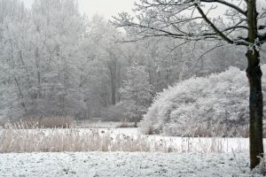 winterland 42 by priesteres-stock