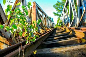 Tree on the rails by iStalkerTM