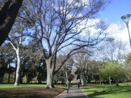 melbourne gum tree 1 by LuchareStock