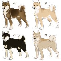 Shiba Inu Imports - CLOSED by AkaKennel