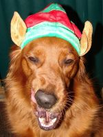 Francis Christmas Elf Dog 2 by FantasyStock