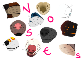 Nose Study! by Studios-Of-White