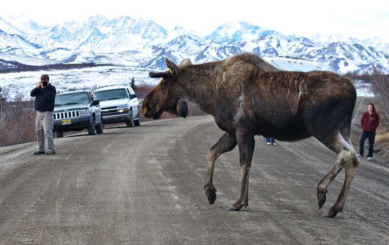 Real Denali by JWFisher