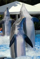 March of the Dolphins by orcalover109