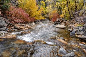 American Fork Canyon Stream in the Fall by gwhitton