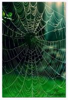 Broken Web by TlCphotography730