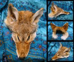 Coyote Mask by SPWilder