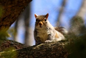 Squirrel on the edge. by sweatangel