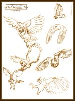 Owl Sketches 01 by Cre8tivemarks