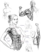 Anatomy studies 01 by Naschi