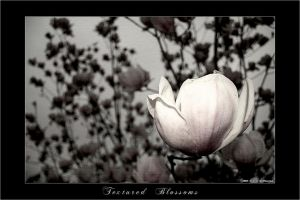 Textured Blossoms by yourmetaphor
