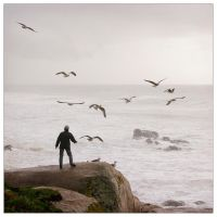 The Man and the Seagulls by JoseMelim