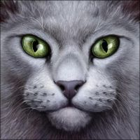 The Grey Warrior by Wynnyelle