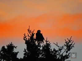 The Orange Eagle At Sunset by wolfwings1