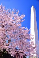 Monumental Blossoms by xxsardisxx