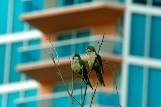 high-rise parakeets by sporto