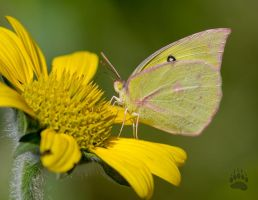 Green butterfly by Karup