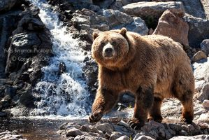 Grizzly Paradise by Sagittor