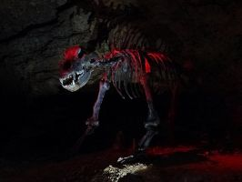 Cave bear by Aewendil