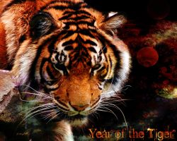 Year of the Tiger by Eicats