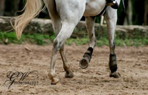 ~Horses legs~ by EquitheralPhotograpy