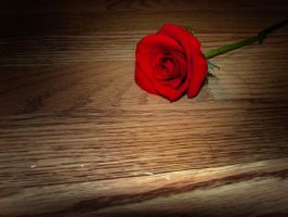 Rose on the floor in water 2 by estesgraphics