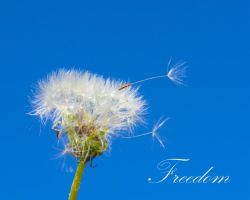Freedom by lanephotography