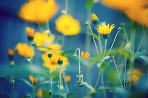Yellow Flowers by Freggoboy
