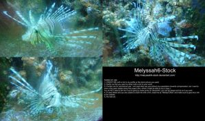 Lionfish Stock 1 by Melyssah6-Stock