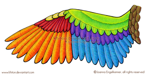 Bird Wing Diagram by khiton
