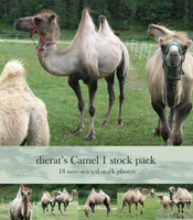 Camel 1 stock pack by dierat-stock