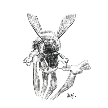 Bee for Day 22 of Inktober by Wenchkin