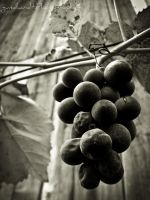 a bunch of grapes II by Gundhardt