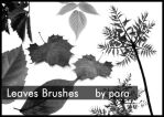 Leaves Brushes by GMpara