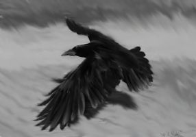 Raven by spill-milk